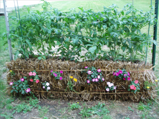 Flowers In The Sides Of Your Bales Makes Your Vegetable Garden Look Beautiful As Well As Productiv Strawbale Gardening Straw Bale Gardening Hay Bale Gardening