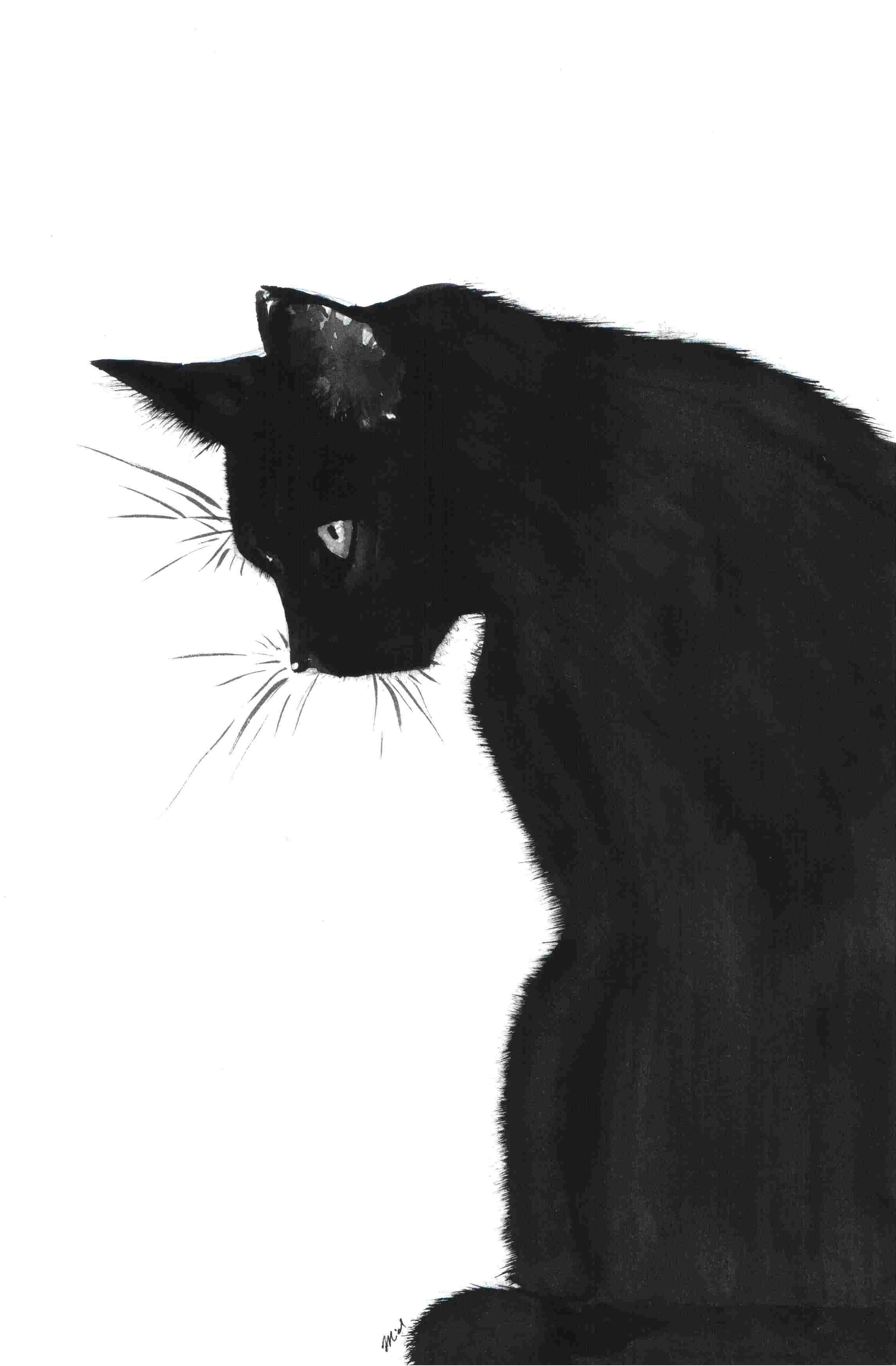 Cat Art Cats Pinterest Black Cat Art Black Cat Drawing And