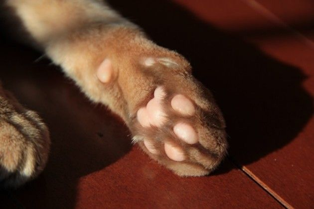 ...little pink beans will awaken me.  Every...single...morning...at...5am.