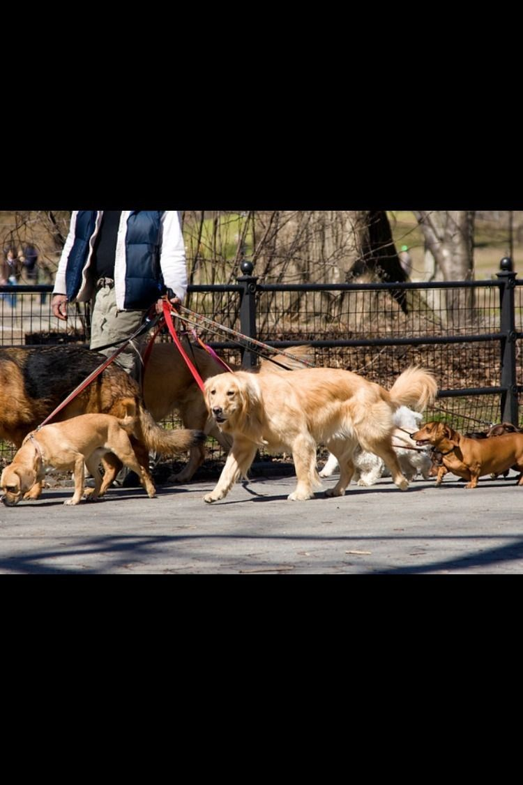 We Connect To Affordable Experienced Insured Dog Walker And Pet