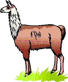 related pictures llama face clip art alpacas pinterest llama rh pinterest com llama clipart black and white llama clipart outline