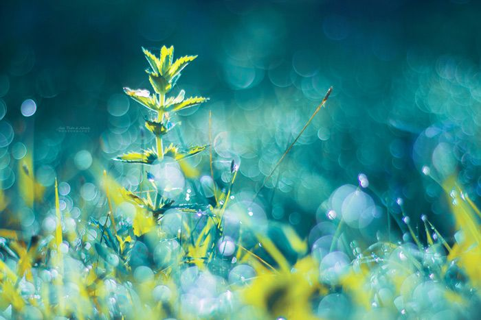 Magical Macro Photography of Nature by John Peter - CAT IN WATER