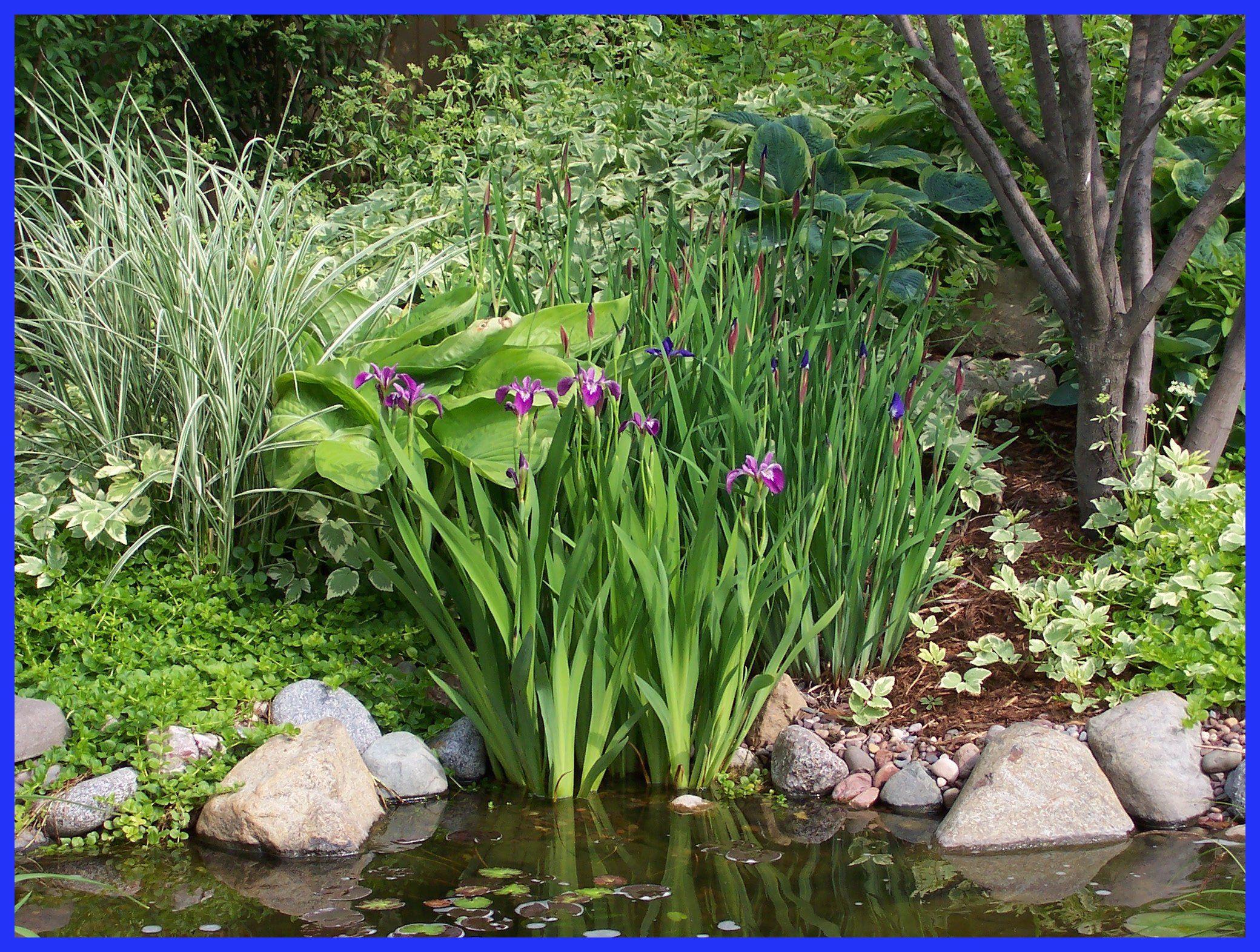 idées pour le bassin au fond du jardin Garden Pinterest