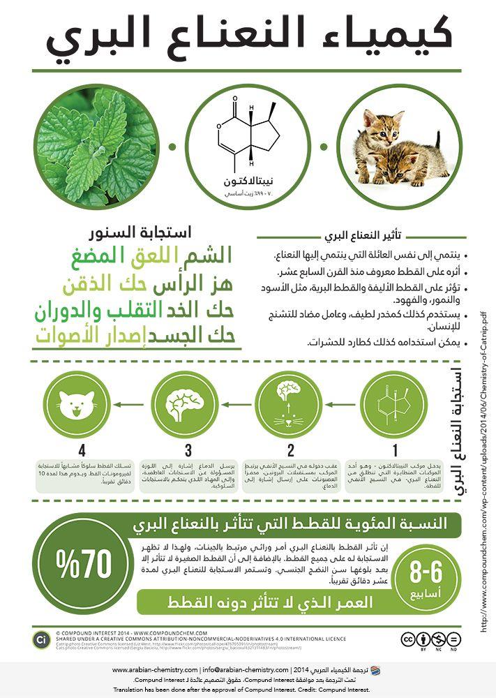 كيمياء النعناع البري الكيمياء العربي Chemistry Google Images 10 Things