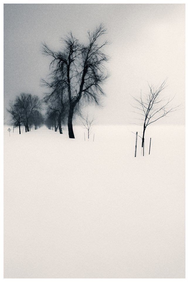 The Road Of Trees And Birds And Snow And Silence Sasa Gyoker Here Book Tree Of Life Artwork Winter Images Art Photography