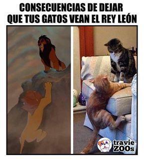Creo que Disney terminó por afectar su relación#cats #dogs #animales #felinos #reyleón #thelionking