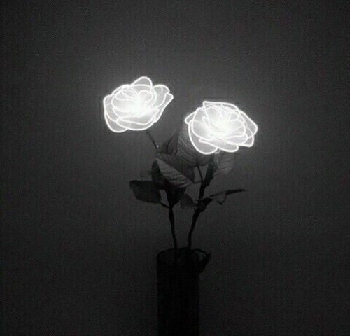 Rose Flowers And Light Image Black Aesthetic Black And White Aesthetic White Aesthetic