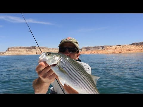 Lake Powell Striper Slurp Fishing Technique - (More info on: https://1-W-W.COM/fishing/lake-powell-striper-slurp-fishing-technique/)