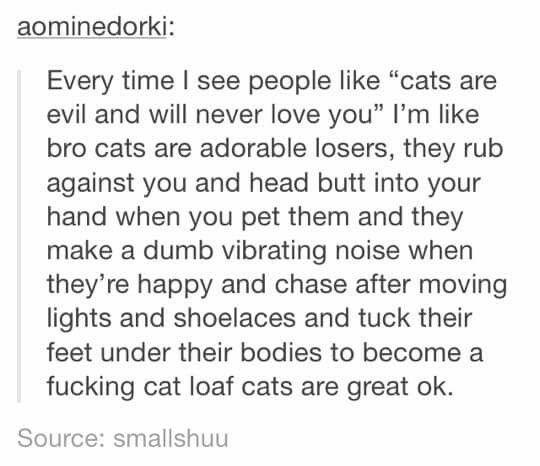 Cats = Love