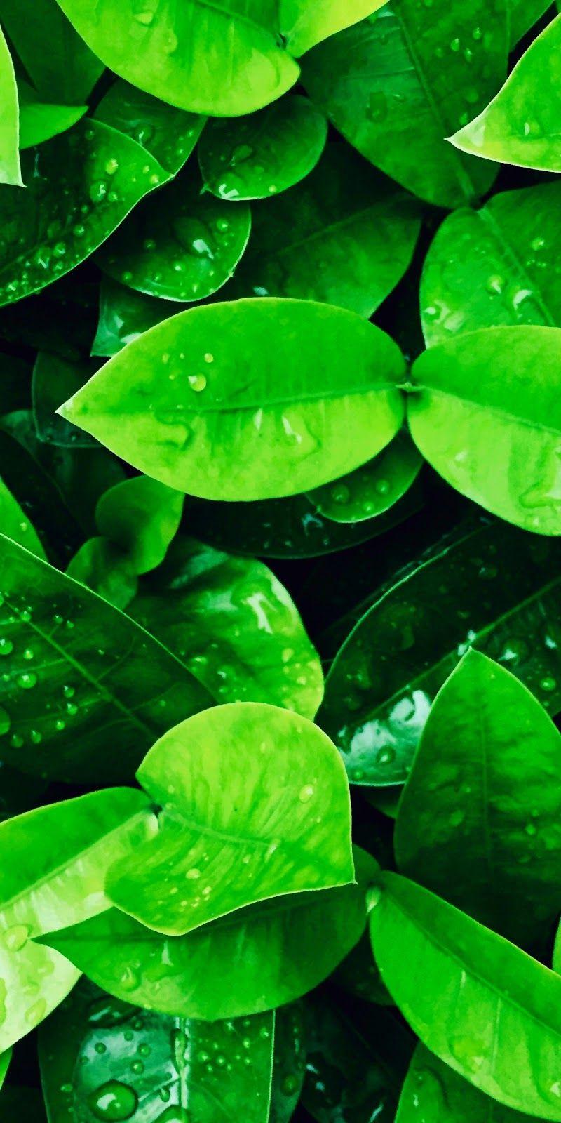 Green Leaves Iphone X Verde Pantalla Y Fondos De Pantalla