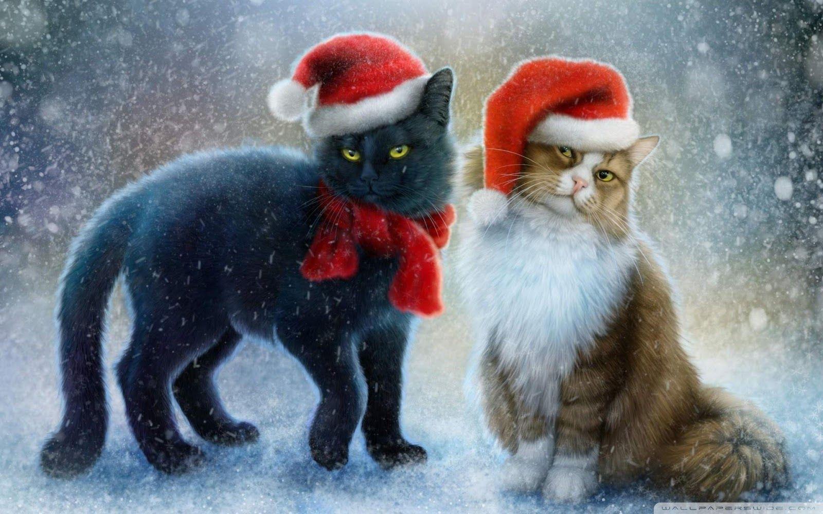 1080p Hd Christmas Cat Wallpaper High Quality Desktop