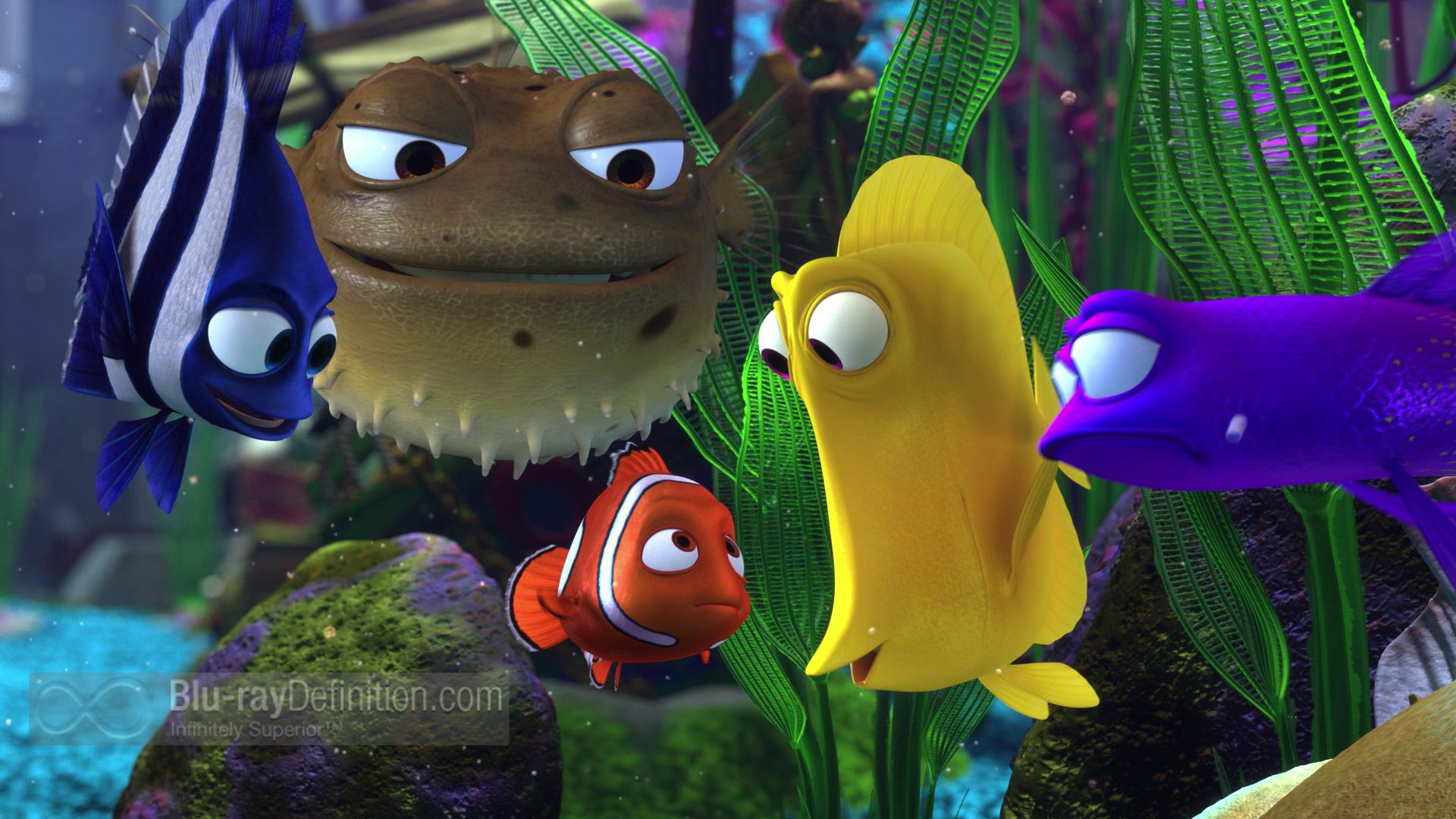 Fish in nemo aquarium - The 10 Best Images About Finding Nemo On Pinterest Finding Nemo Fish Tank Disney Wallpaper And Underwater