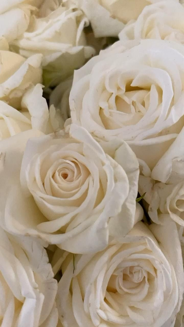 White Spray Wedding roses