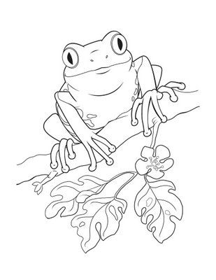 puerto rico coloring pages | dibujo de un coqui Colouring Pages ...