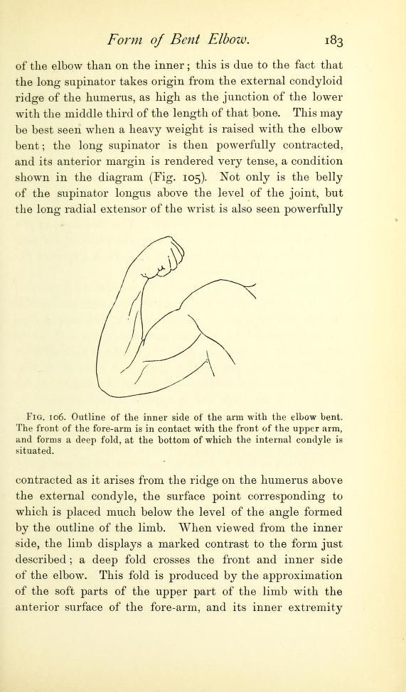 Outline of the inner arm when the elbow is bent. From: \