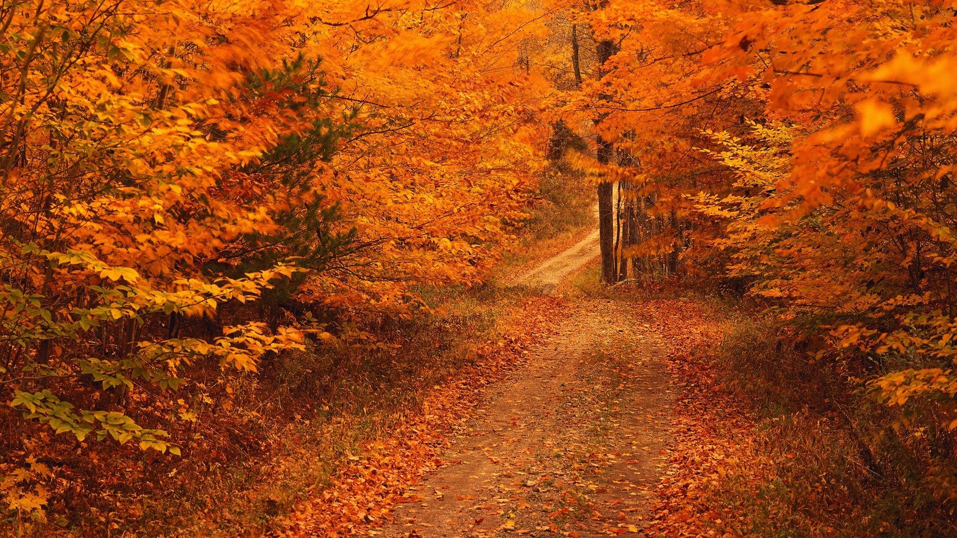 Fall Background Hd The Great Outdoors Nature Fall Background