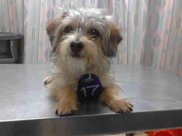 HOUSTON, Animal Shelter adopt a