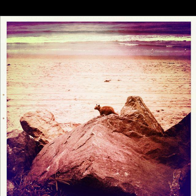 Squirrel beach