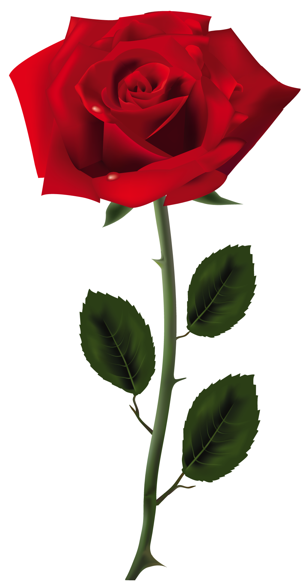Red Rose PNG Art Picture | ~Colors: Shades of Red~ | Pinterest ... for Transparent Png Images Roses  51ane