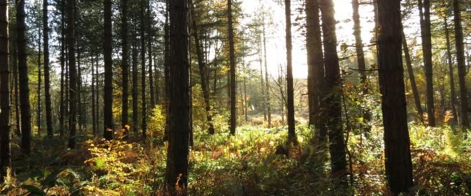 Greno Woods in the Sunlight