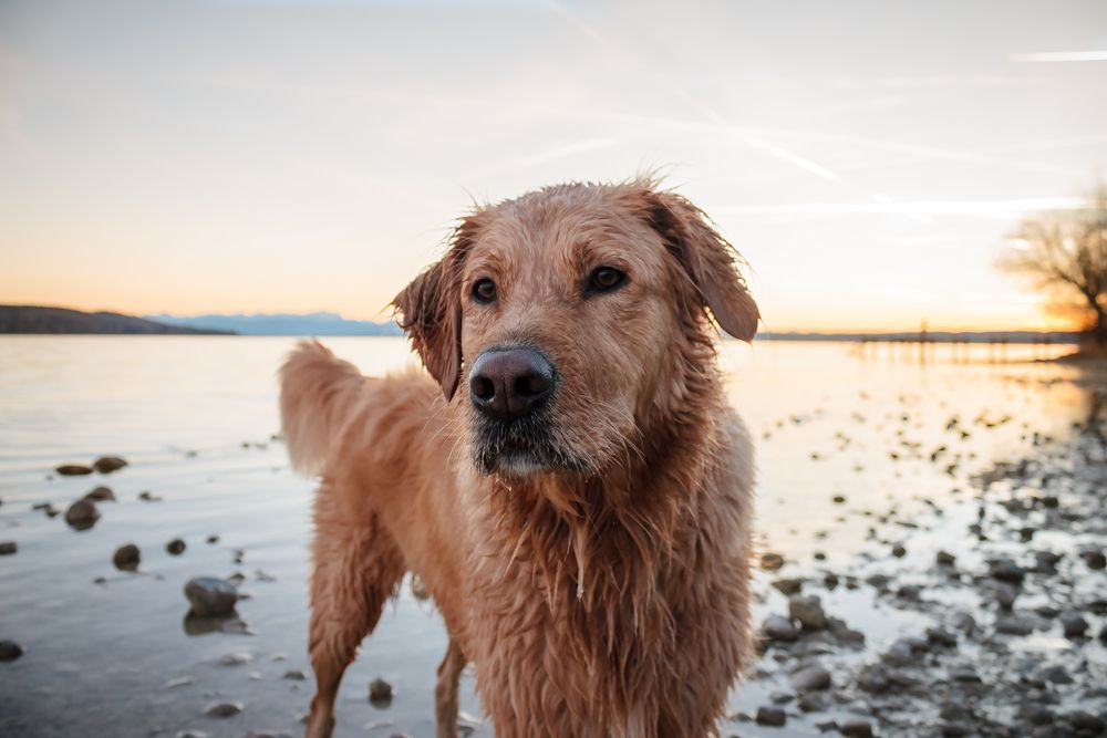 Which pet insurance is right for tater tot pet