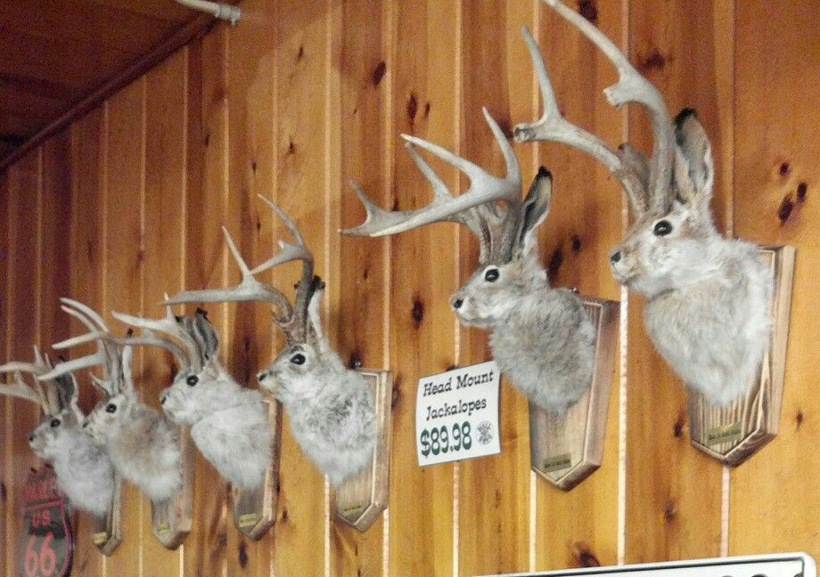 jackalope trophies wall drug wall sd wall drug south on wall drug south dakota id=98097