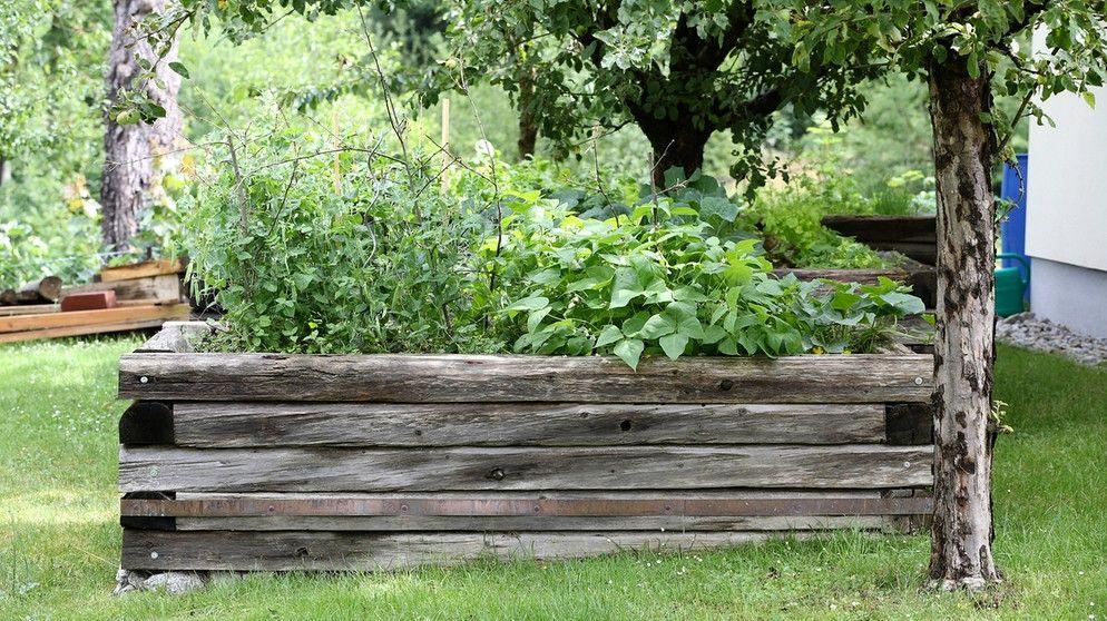 Hochbeet Befullen Diese Schichten Kommen In Ein Hochbeet Hochbeet Garten Hochbeet Und Hochbeet Befullen