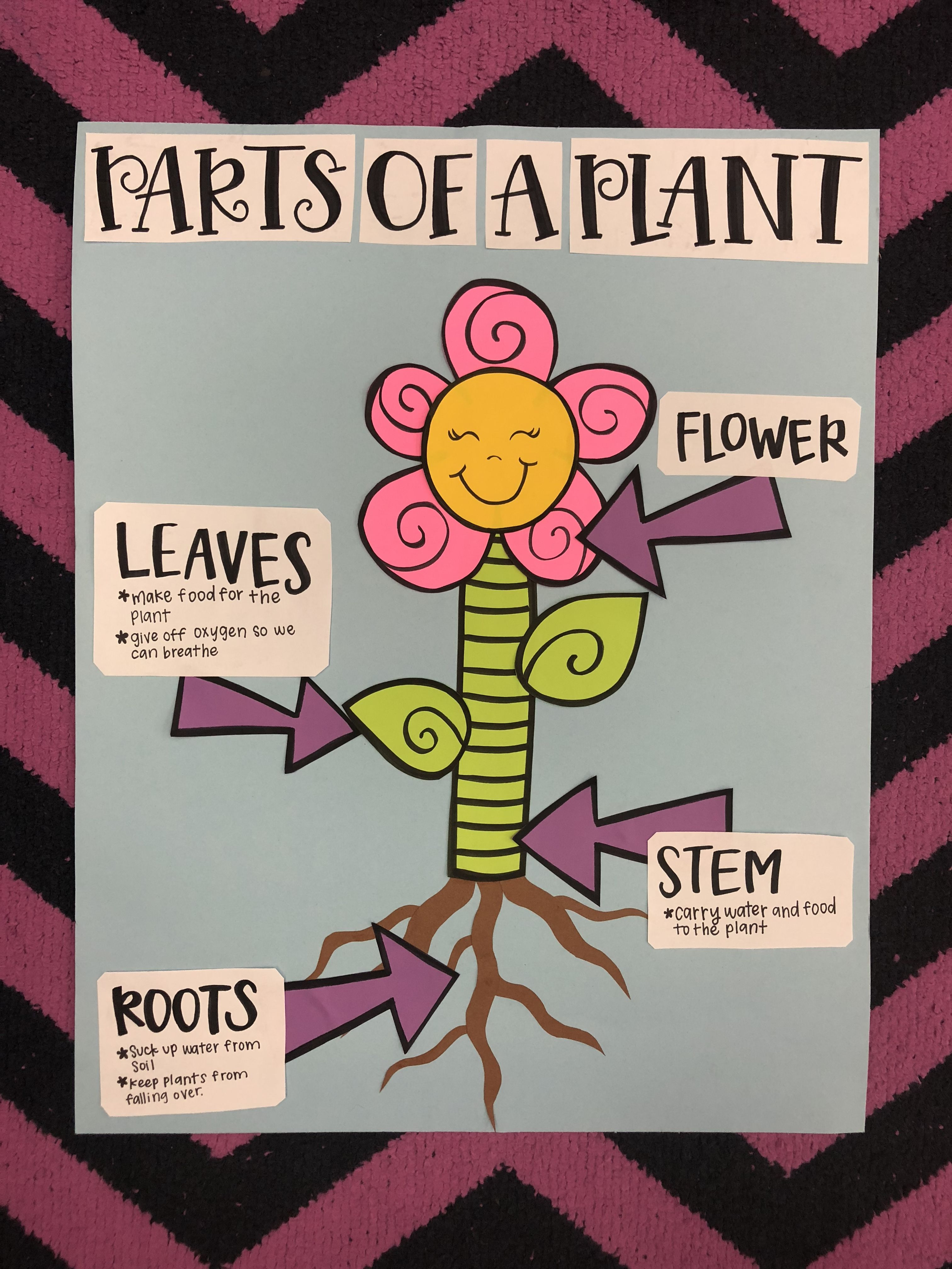 Parts Of A Plant Flower Anchor Chart 1st Grade