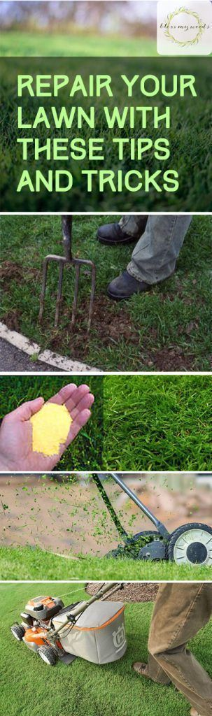 Repair Your Lawn With These Tips and Tricks - How to Repair Your Lawn, Lawn Repair Hacks, Gardening, Gardening Tips and Tricks, Landscaping Hacks, Landscaping 101 #gardeninghacks