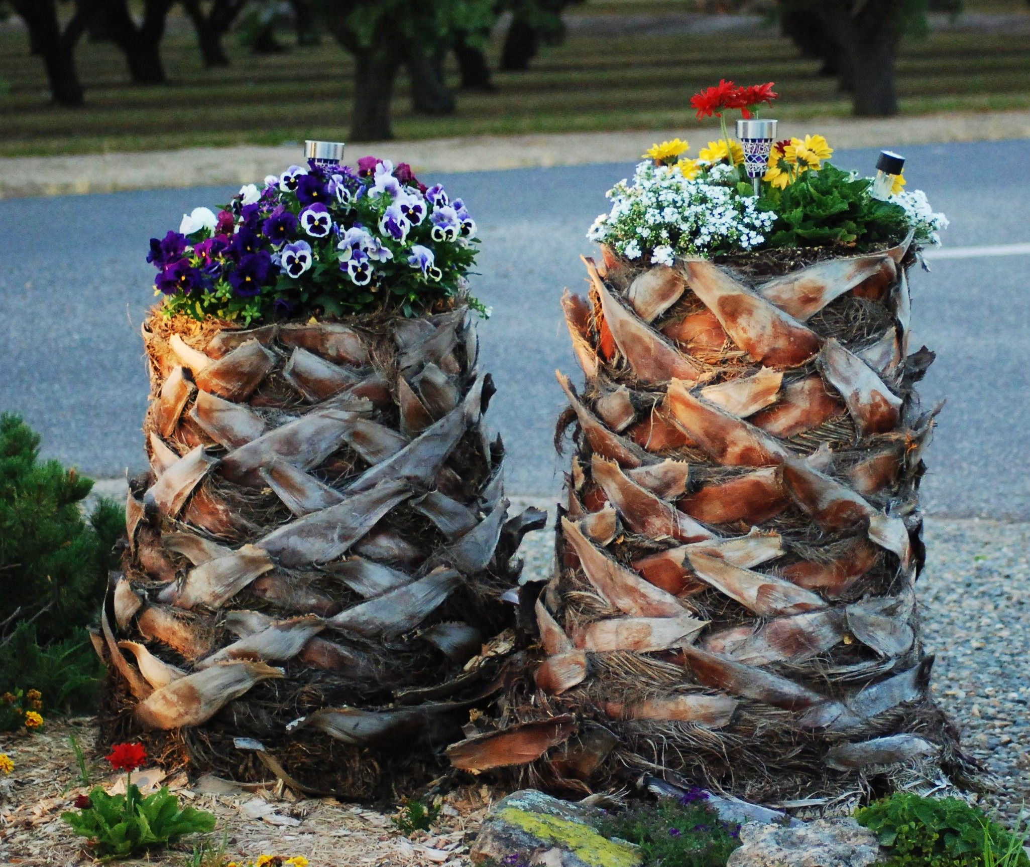 We made the stumps from our palm trees into planters just for Hollow tree trunk ideas