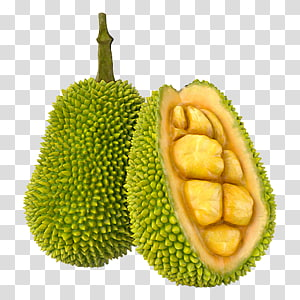 Two Durian Fruits Jackfruit Cempedak 3d Modeling Turbosquid Others Transparent Background Png Clipart Jackfruit Fruit Artwork Durian