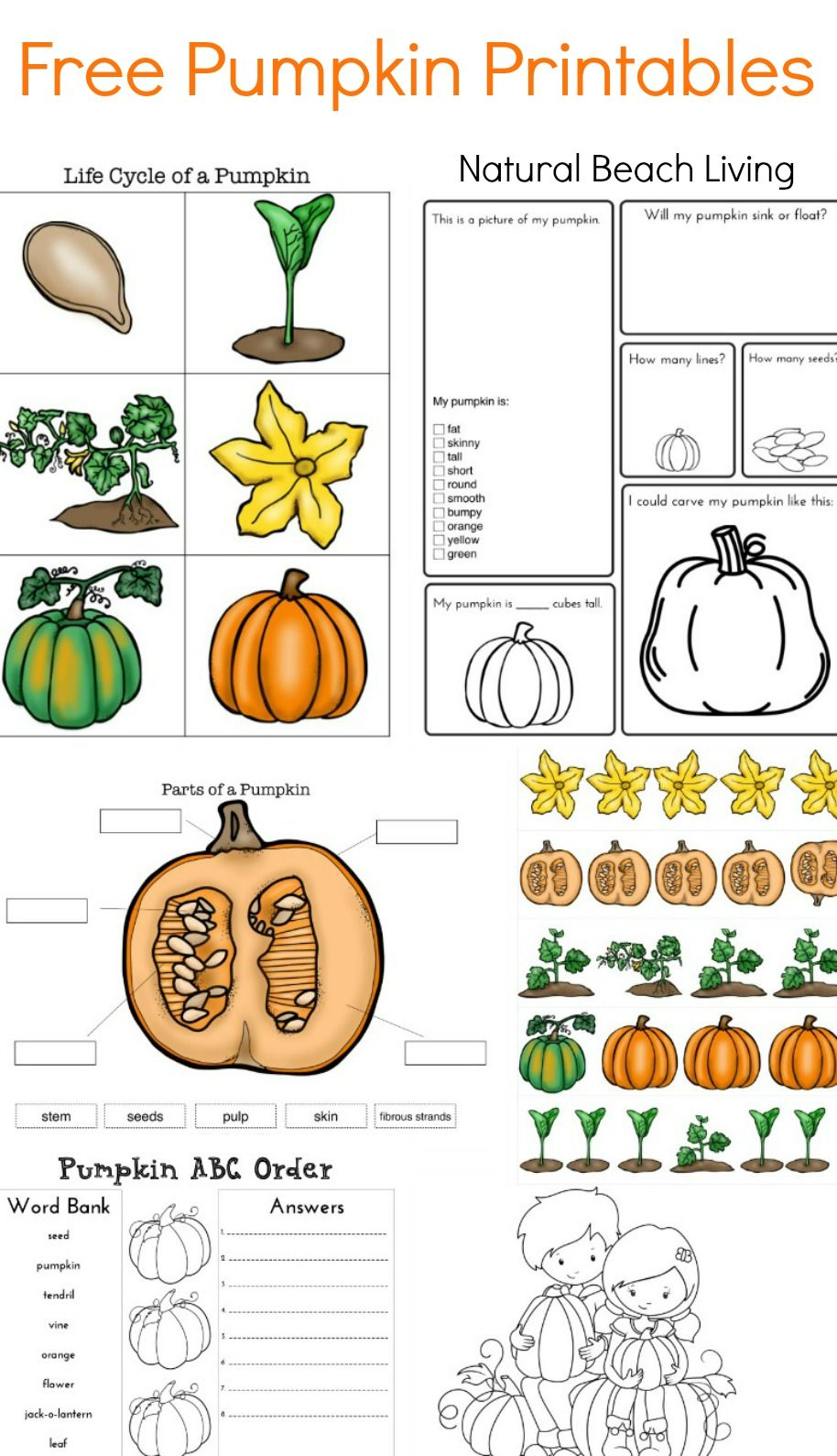 Pumpkin Life Cycle Pumpkin Life Cycle First Grade Science