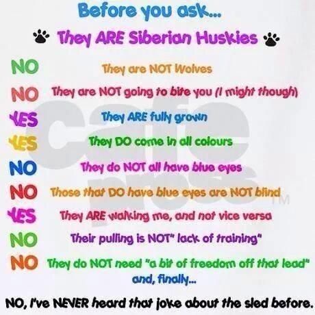 Facts About Siberian Huskies Husky Facts Husky