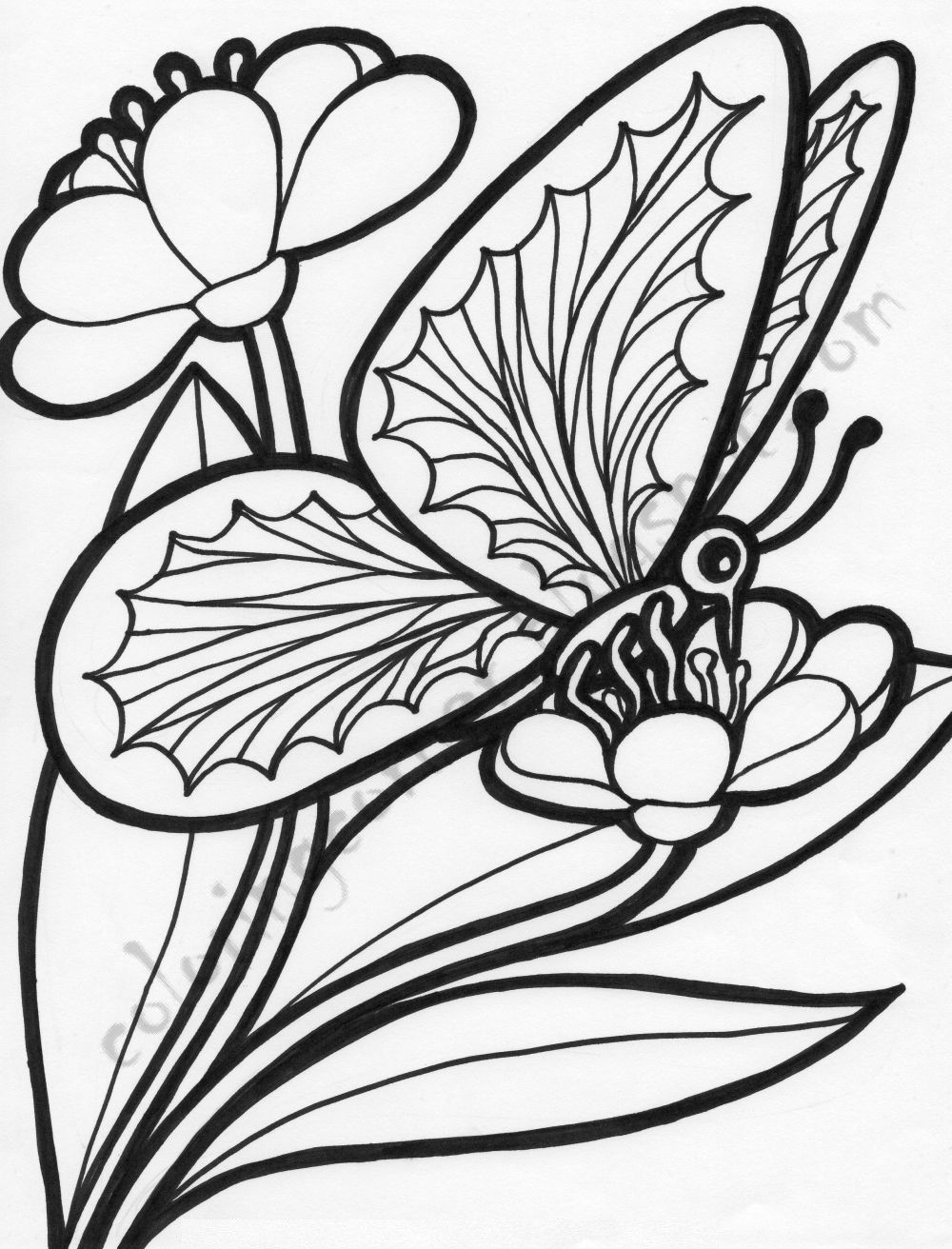 Butterfly Coloring Page For Adults Youngandtae Com Butterfly Coloring Page Printable Flower Coloring Pages Free Coloring Pictures [ 1312 x 1000 Pixel ]