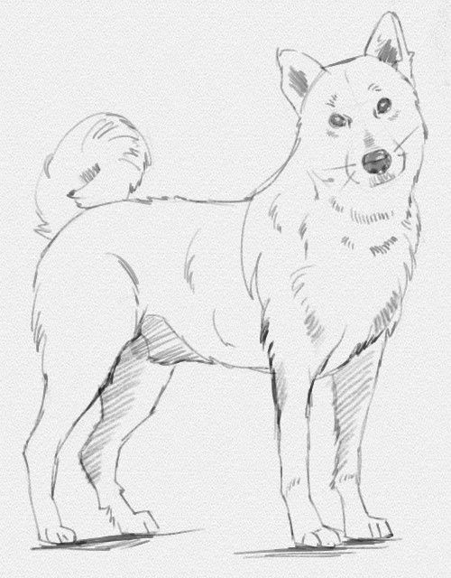 рисунки карандашом пошаговые собак