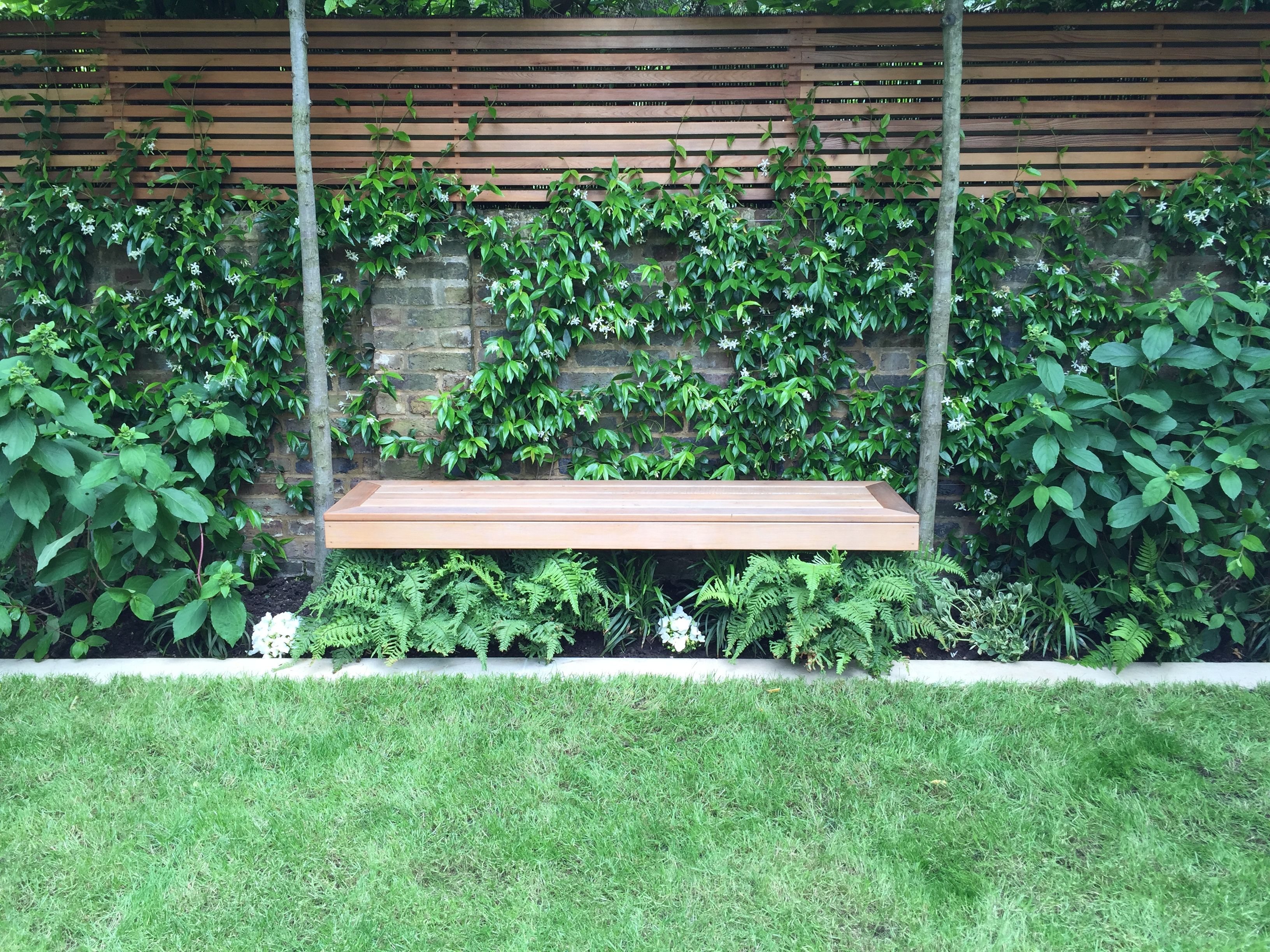 Smaller ferns look beautiful nestled gently under a bench or other structure. Intersperse with some summer bedding to suit your scheme.