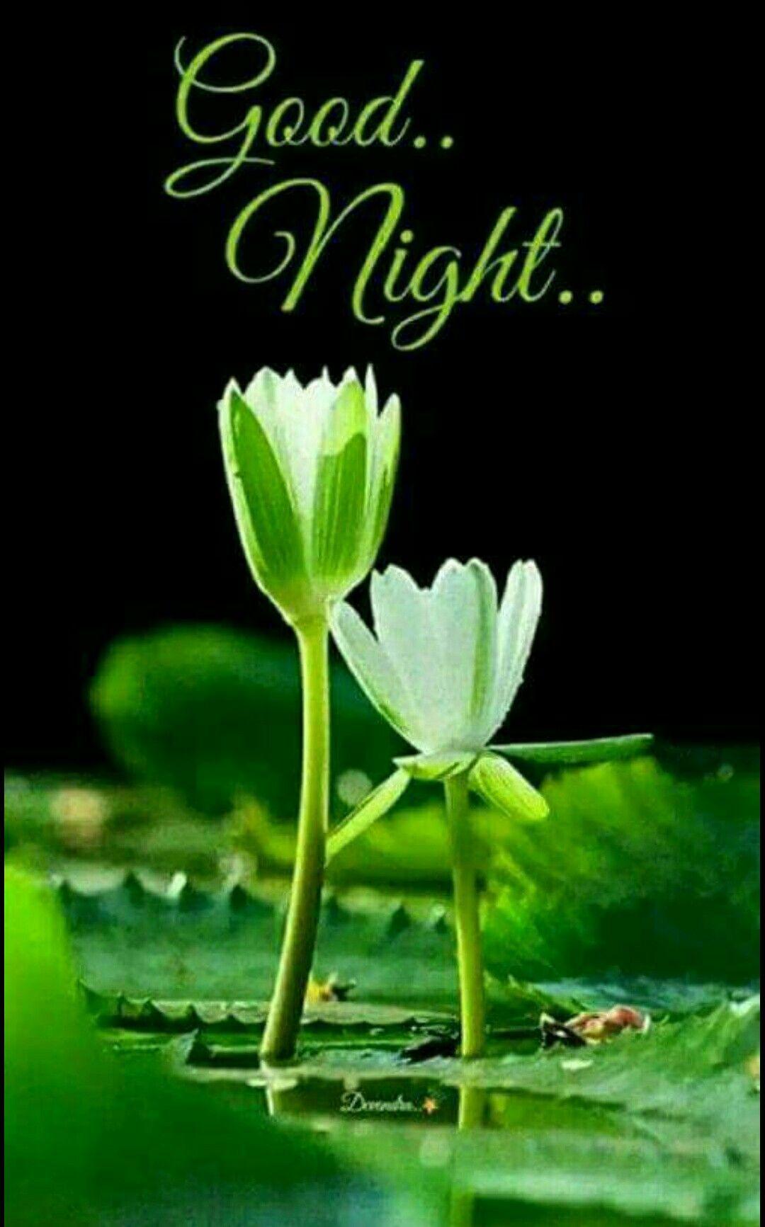 Pin P Good Night , Sweet Dreams-9412