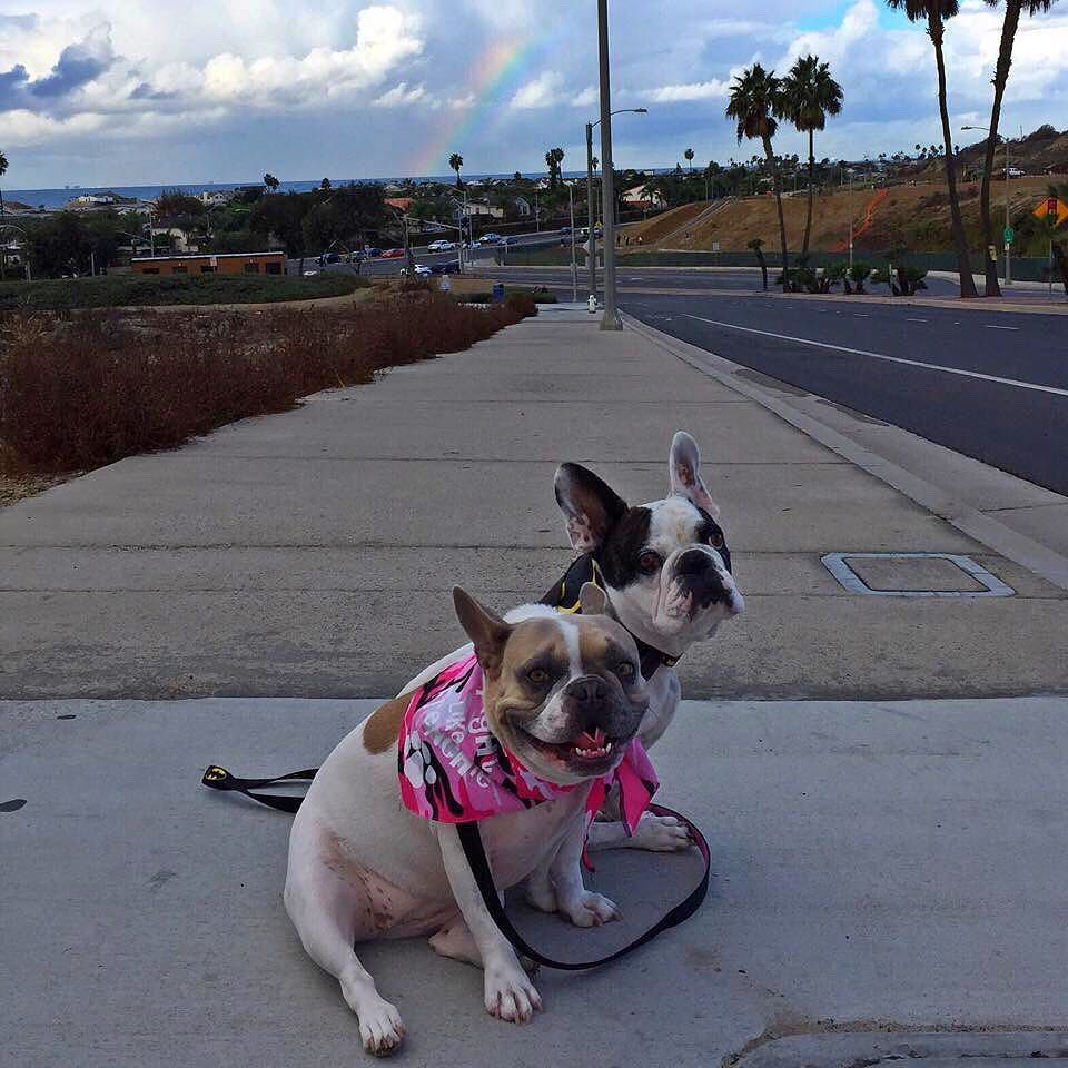 With Heavy Hearts We Say Goodbye To Our Dear Sweet Frenchie Friend