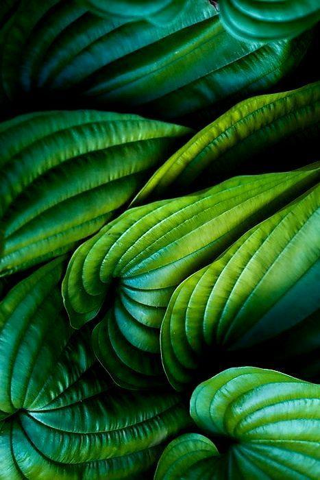iphone pinterest vert vegetal et nuances de vert. Black Bedroom Furniture Sets. Home Design Ideas