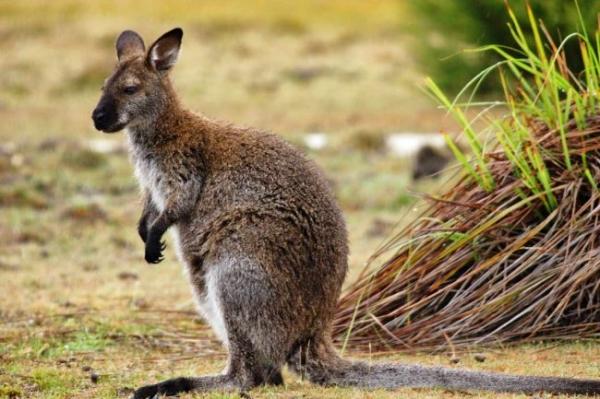 15 Best Known Unique Wild Animals of Aus in 2020