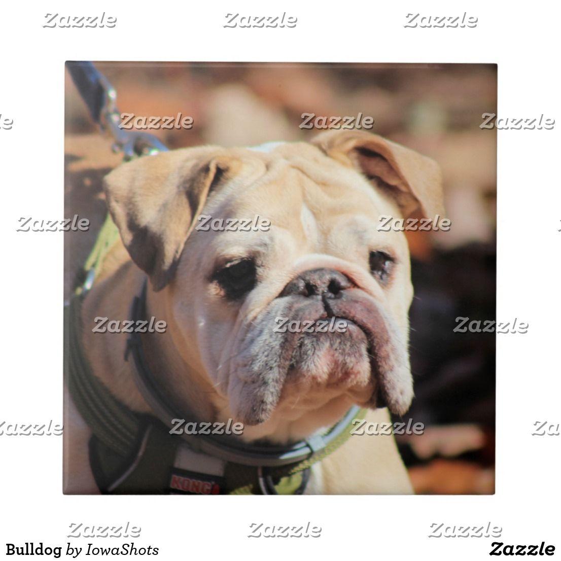 Bulldog Ceramic Tile Zazzle Com Bulldog Ceramic Tiles Ceramics