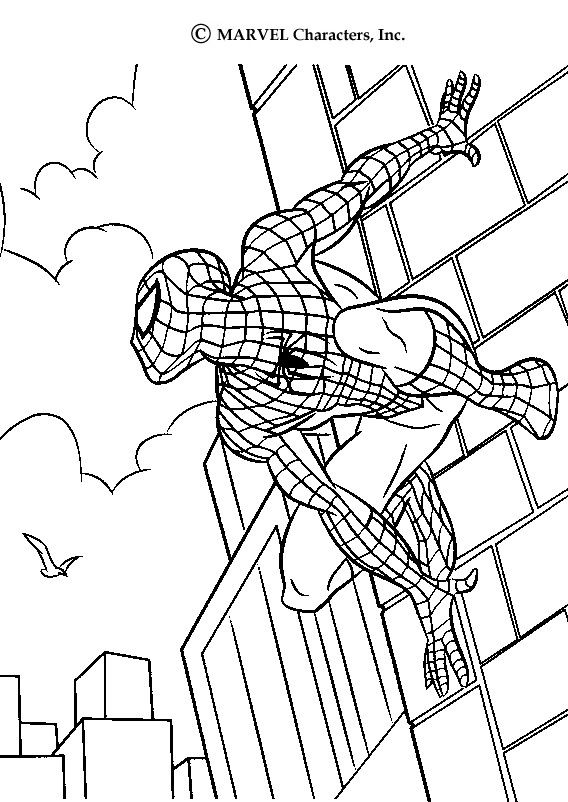 Color this Spiderman drawing. This Spiderman scales walls