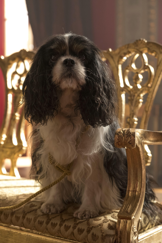 Unit Still From Victoria 2x02 Cavalier King Spaniel Cavalier King Charles Dog King Charles Dog