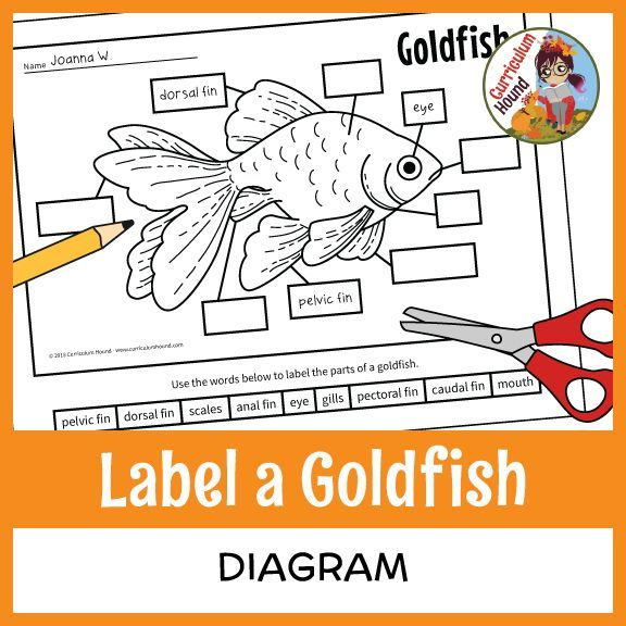 label a fish diagram - parts of a fish - goldfish - students cut and paste  or write words in boxes to label a goldfish diagram