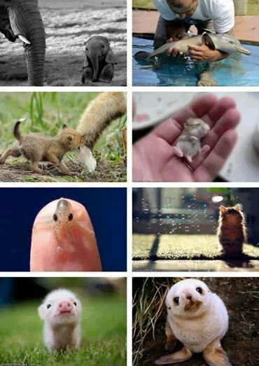 Baby Animals Daw With Images Cute Baby Animals Baby Animals Pictures Cute Animals