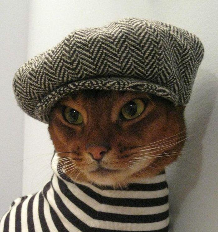 Lustiges Foto Katze Franzosischer Hut Barett Mutze Kunst Pinte
