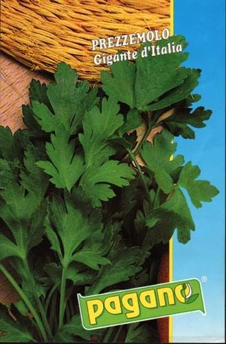 600 SEEDS NON-GMO Triple Curled Parsley Seeds