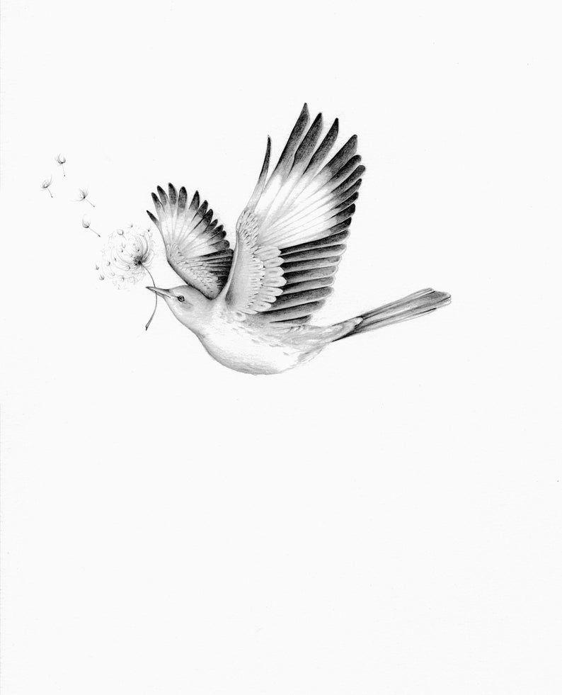 Bird Drawing Pencil Drawing of a Bird Art print Minimalist Wall Art Original Art Fine Art Original Print Art Pencil Drawing Original Drawing