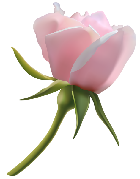 Beautiful Pink Rose Bud Png Clipart Image Beautiful Pink Roses Rose Buds Clip Art