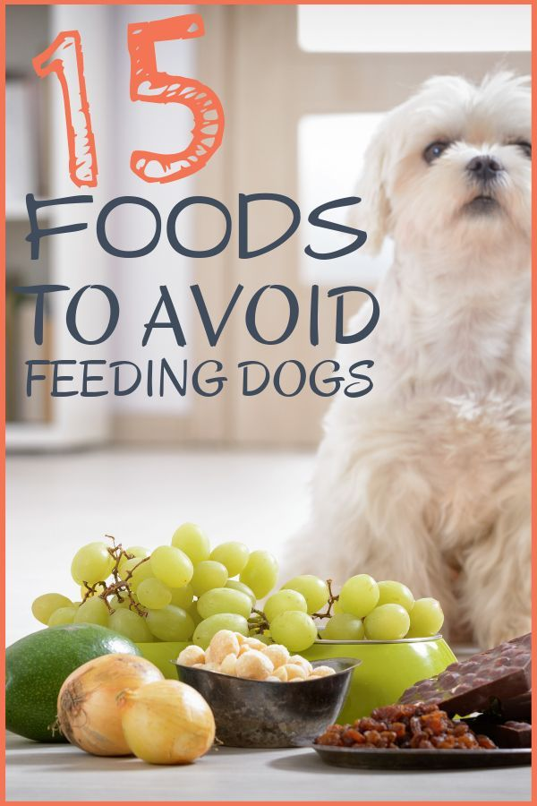 15 Human Foods your Dog should Avoid at All Cost Human